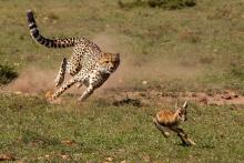In to the kill by Michael Ball